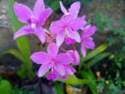 Plant, Blossom, Flower, Leaf, Geranium, Yard, Orchid, Vegetation, Potted Plant, Jar, Pottery, Vase, Planter, Agavaceae, Herbs