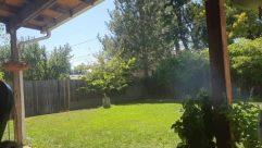 Yard, Grass, Plant, Vegetation, Backyard, Tree, Vase, Pottery, Potted Plant, Jar, Forest, Land, Woodland, Chair, Furniture