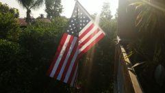 Flag, Symbol, Plant, Tree, American Flag, Flare, Light, Vegetation, Sunlight