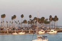 Harbor, Dock, Port, Waterfront, Water, Pier, Marina, Plant, Tree, Vehicle, Boat, Arecaceae, Palm Tree, Sailboat, Building