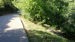 Vegetation, Plant, Path, Bush, Land, Woodland, Forest, Tree, Yard, Grove, Trail, Grass, Road, Street, Building