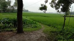 Field, Grassland, Vegetation, Plant, Countryside, Paddy Field, Grass, Land, Rural, Farm, Woodland, Forest, Tree, Agriculture, Bush