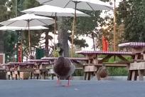 Bird, Canopy, Garden Umbrella, Patio Umbrella, Chicken, Fowl, Poultry, Building, Umbrella, Pigeon, Dove, Duck, Beak