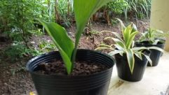 Plant, Vase, Pottery, Jar, Potted Plant, Planter, Yard, Leaf, Agavaceae, Herbs, Garden, Herbal, Tree, Tabletop, Furniture