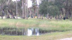 Land, Water, Plant, Tree, Vegetation, Forest, Woodland, Grove, Marsh, Bog, Swamp, Tree Trunk, Grass, Yard, Pond