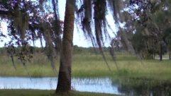 Land, Plant, Tree, Water, Vegetation, Tree Trunk, Woodland, Forest, Bog, Marsh, Swamp, Grove, Yard, Grass, Willow