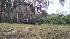 Ground, Tree, Plant, Land, Vegetation, Woodland, Forest, Tree Trunk, Grove, Water, Yard, Jungle, Wilderness, Soil, Bog