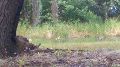 Plant, Vegetation, Land, Bird, Ground, Wildlife, Tree, Canine, Fox, Kit Fox, Deer, Elk, Bush, Grass, Water