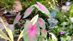 Plant, Blossom, Flower, Geranium, Leaf, Pottery, Potted Plant, Vase, Jar, Anthurium, Planter, Bird, Herbs, Flower Arrangement, Araceae