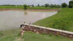 Bird, Water, Plant, Vegetation, Field, Land, Grassland, Grass, Countryside, River, Ditch, Tree, Rainforest, Reservoir, Path