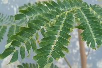Plant, Leaf, Astragalus, Flower, Blossom, Vegetation, Green, Fern, Grass, Tree, Land, Bush, Reptile, Snake, Rainforest