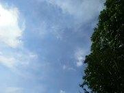 Sky, Sunlight, Light, Flare, Sun, Azure Sky, Cloud, Plant, Tree, Vegetation, Cumulus, Weather, Bird, Flying, Landscape