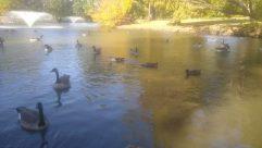 Bird, Water, Goose, Land, Waterfowl, Duck, Reptile, Sea Life, Turtle, Plant, Vegetation, Mallard, Boat, Vehicle, Tree