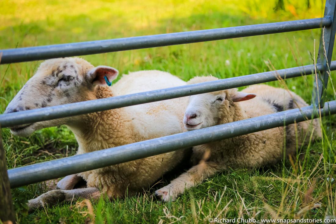 Glamping-at-Knaveswell-Farm-1036
