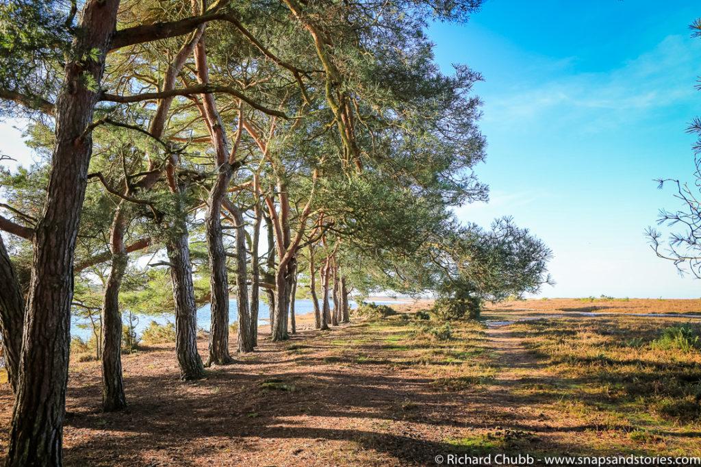 hatchet-pond-new-forest-walk-1005