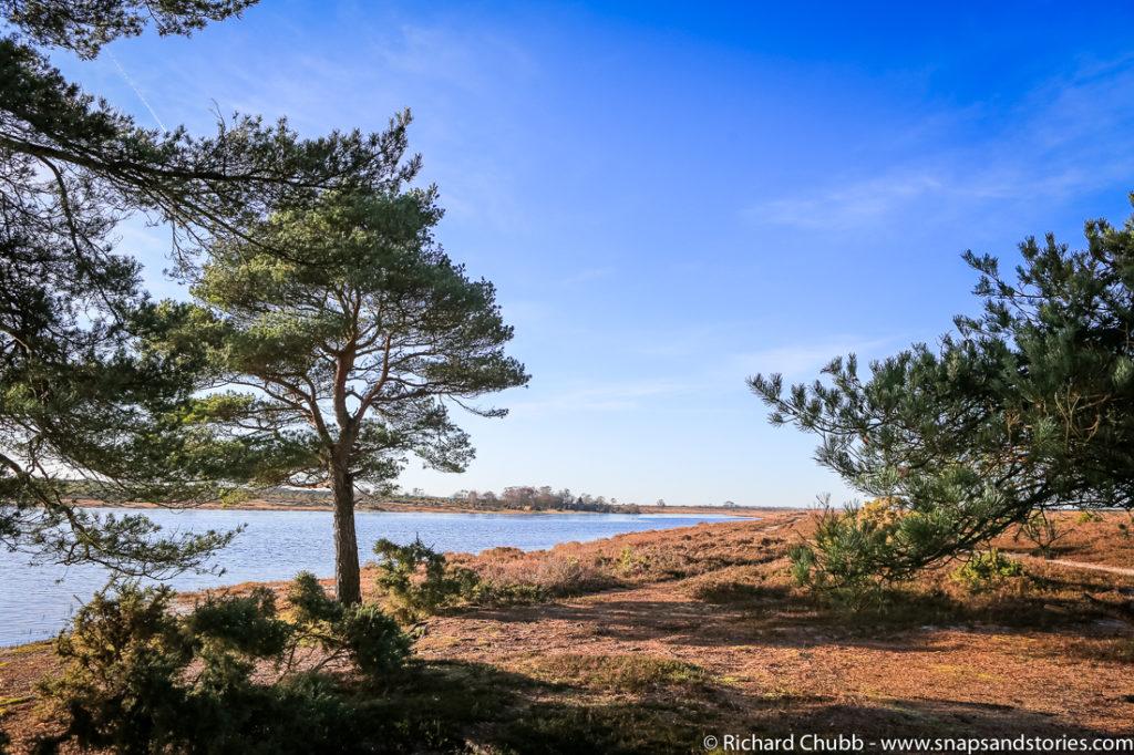 hatchet-pond-new-forest-walk-1006