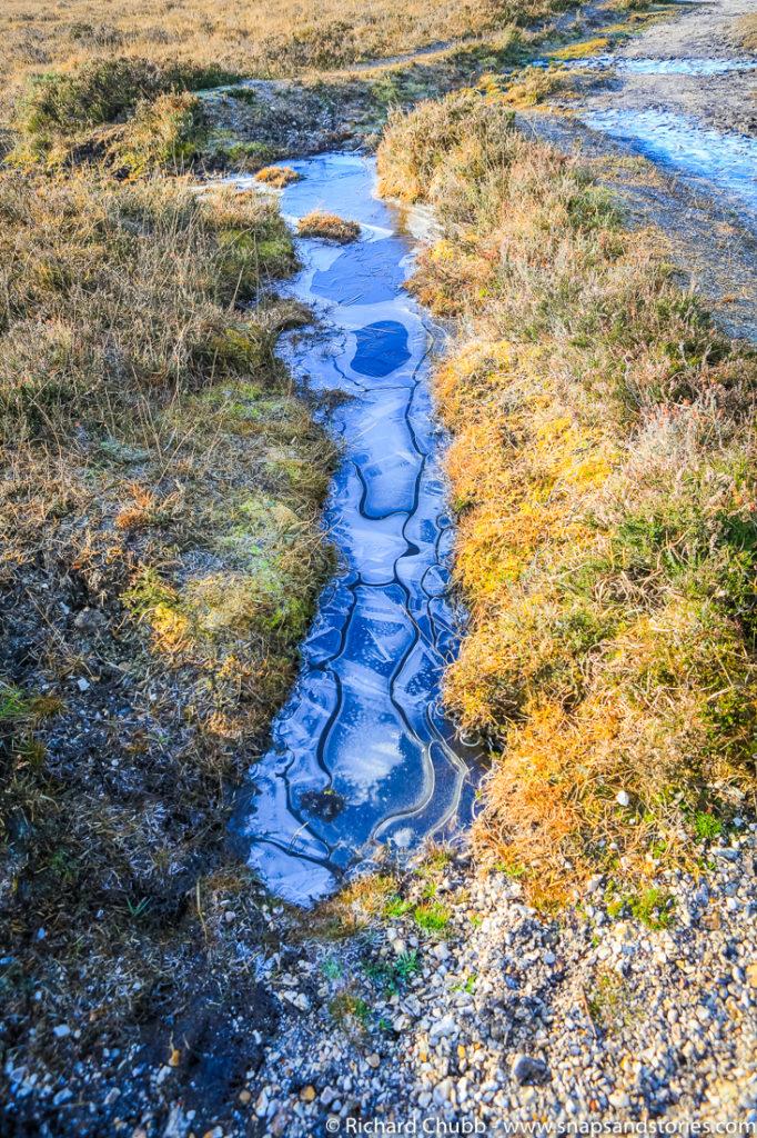 hatchet-pond-new-forest-walk-1009