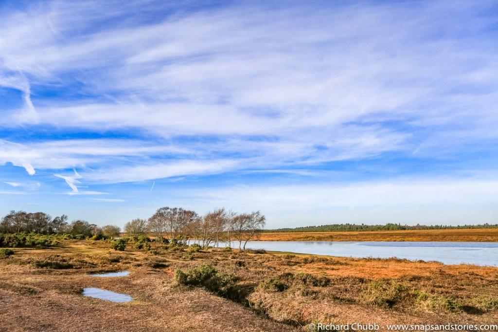 hatchet-pond-new-forest-walk-1015