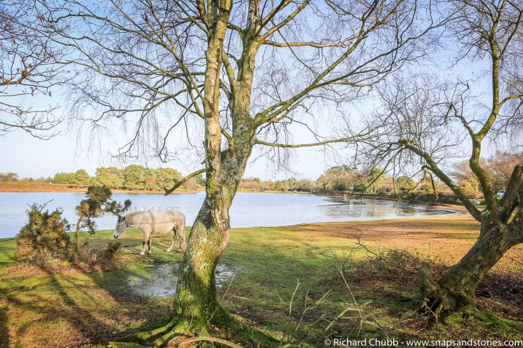 hatchet-pond-new-forest-walk-1017