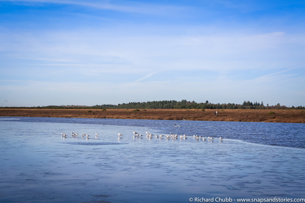 hatchet-pond-new-forest-walk-1020