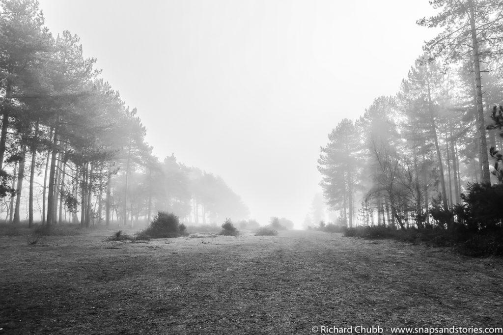 marchwood-walk-30-dec-1003