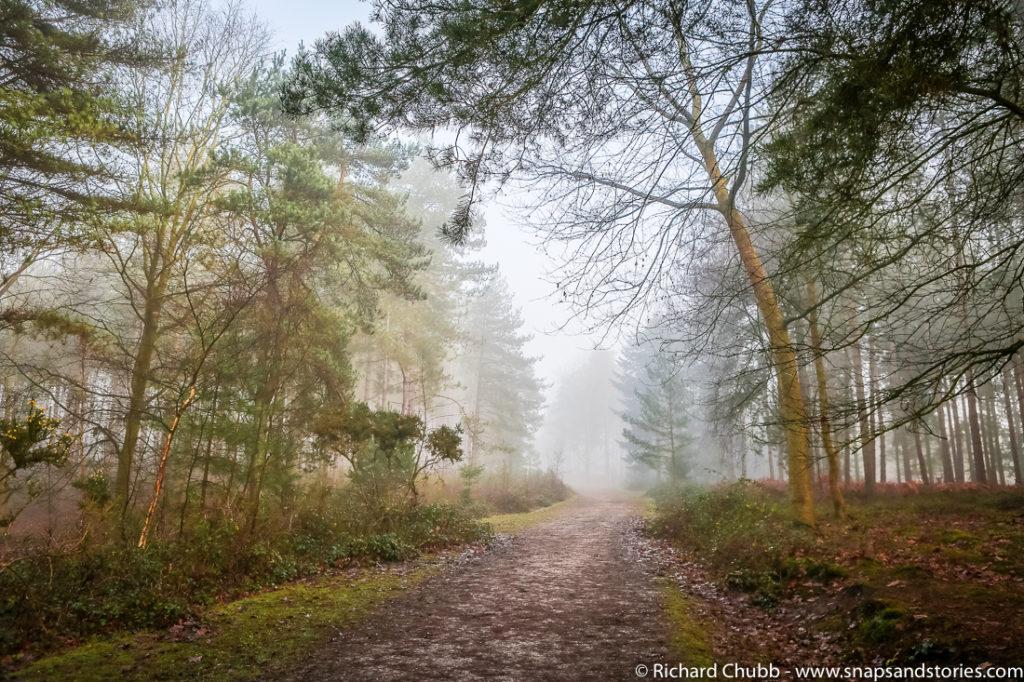 marchwood-walk-30-dec-1023