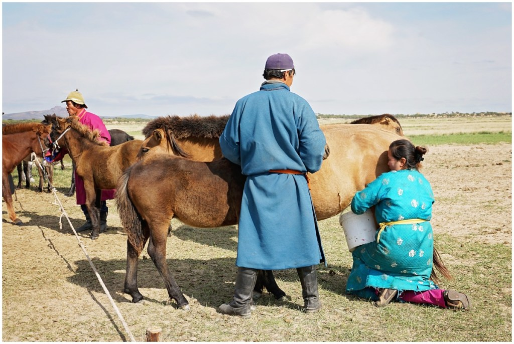milking horses in Mongolia