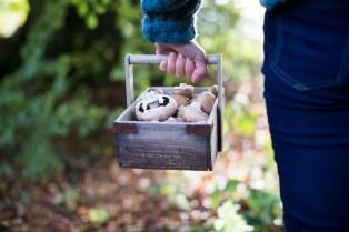 Freshly Picked Wild Mushrooms at the Inn at Newport Ranch