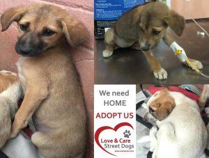 adopt us