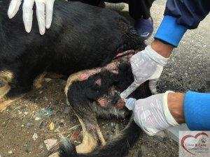 cruelty3
