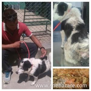 Love & Care Street Dogs