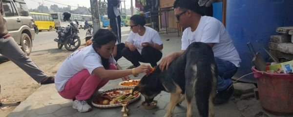 700 Dogs worshiped and Fed : Kukur Tihar