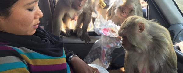 Sneha and her Monkeys