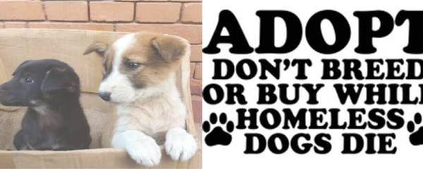 Adopt, Donot Breed or Buy While Homeless Dog Die