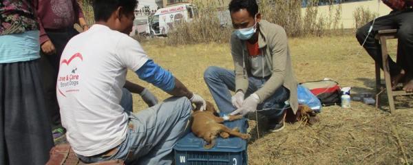 Sneha's Care Team  Treating Pup with Parvo Virus