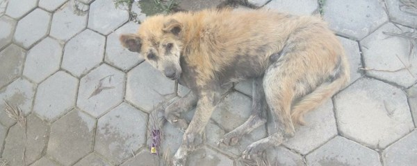 Street Dog with Intense Itching and Skin Condition Rescued