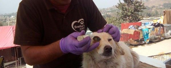 Cuty Pie with Eye Condition rescued from Swyambhunath, Miss Aisha Sayami Helps