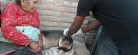 Rabies Vaccination Program at Lalitpur