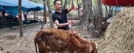 Kailali Updates – Building Shelter