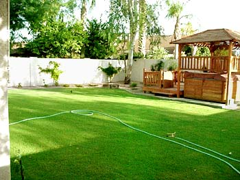 The green, green back yard!