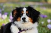 מזון לכלב בפט-בסט – כל מה שהכלבים צריכים