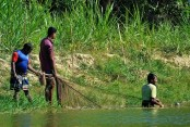 SNM Agro Live fish project