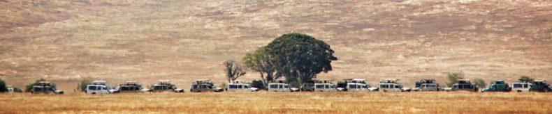 Safari - Tanzanie