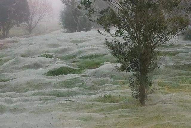 В Австралии начался сезон пауков (18 фото)