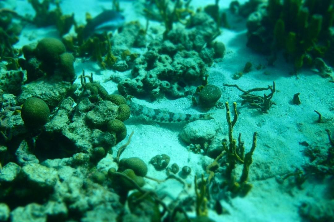 Sand Diver