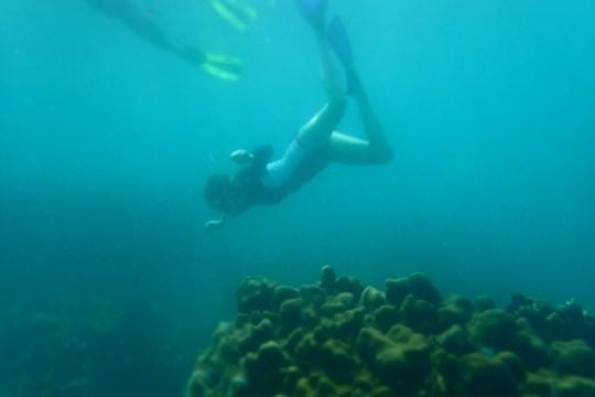 beatiful tobago snorkel