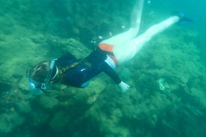 snorkelling Arnos Vale Reef