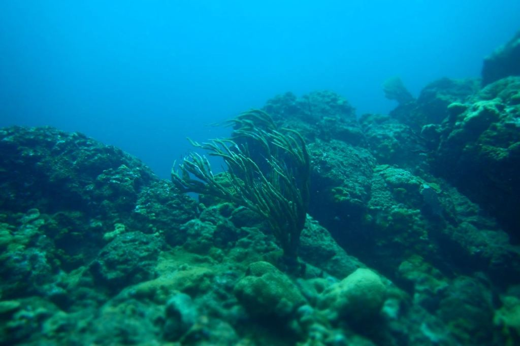 Beauty of the Sea Fan