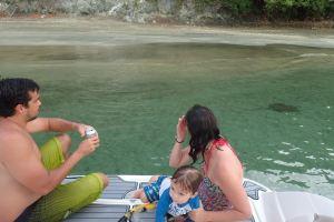Grey Stingray, Cotton Bay