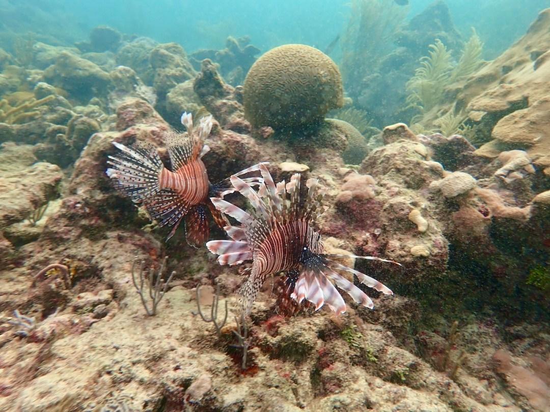Lionfish Tobago